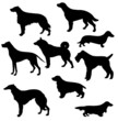 silhouettes of the sorts hunt dogs on white background