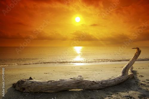 bois flott sur plage corse de hassan bensliman photo libre de droits 17549185 sur. Black Bedroom Furniture Sets. Home Design Ideas