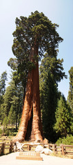 Sequoia Nationalpark, California, USA