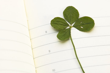 Four Leaf Clover and New Day