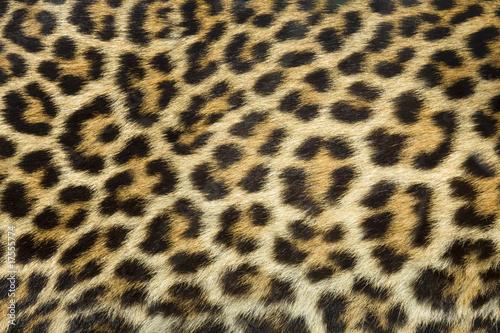 Aluminium Zuid Afrika leopard fur texture (real)