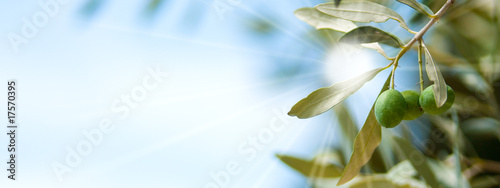 Plexiglas Olijfboom olive tree and sun, branch with olives and blue sky