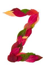 Blätterbuchstabe Z