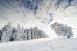 Winterbäume_2