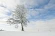 Winterbäume_3