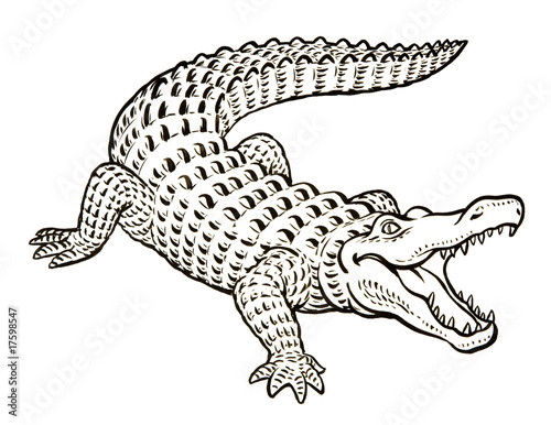 Aligator Coloring Pages Mouth Open