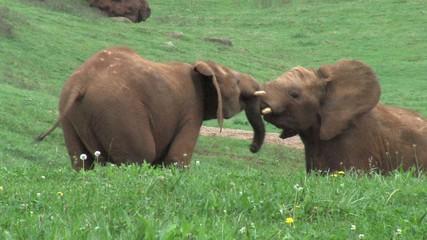 elefantes4