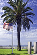 American Flag and Palm Tree