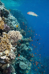 Photo of coral colony
