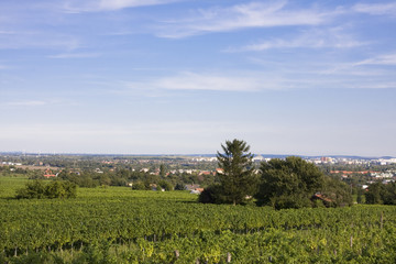 Weingegend Wien Stammersdorf