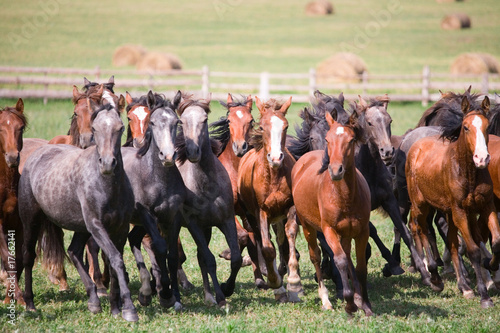 A herd of young horses