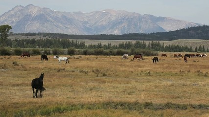 Horses Near Mountain Range in Wyoming