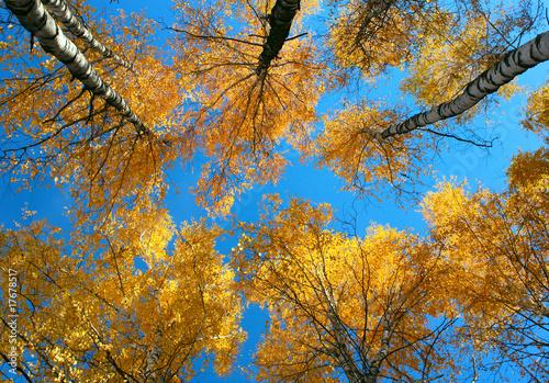 Deurstickers Aan het plafond Trees