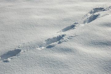 Spuren im Schnee, Winter, Einsamkeit