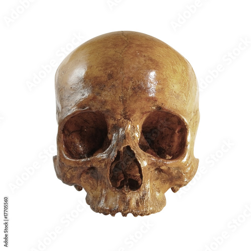A front picture of an incomplete skull