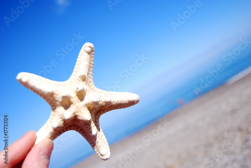 canvas print picture Hand Holding Starfish
