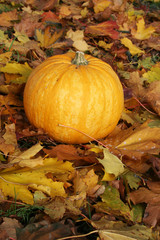 Ripe pumpkin surrounded with colorful autumn leaves