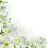 Białe kwiaty - 17740159