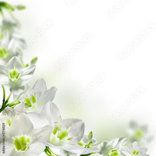 Fotobehang Bloemenwinkel flowers