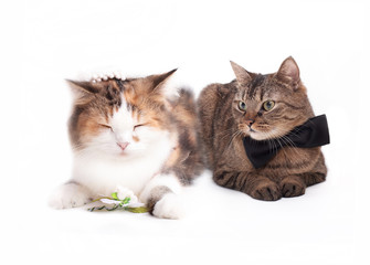 married cat couple in their wedding outfits
