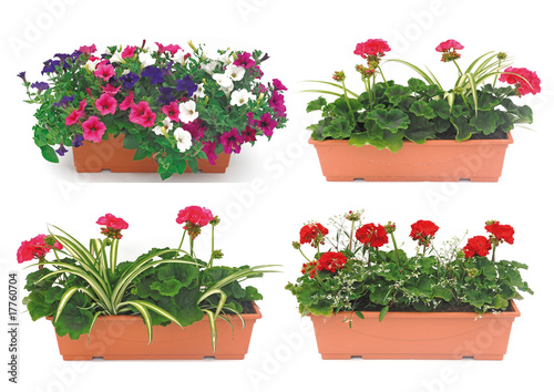 balconnière fleurie - 17760704