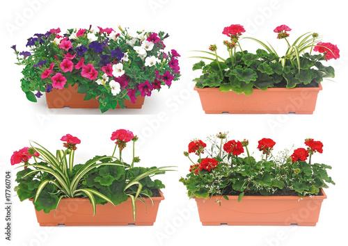 Leinwandbild Motiv balconnière fleurie