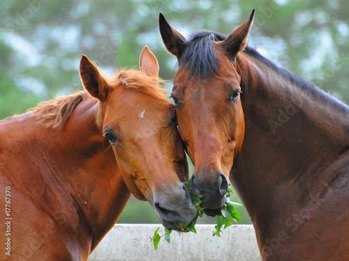 Foto op Plexiglas Paarden zwei Pferde teilen sich einen Zweig