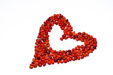 Heart of lucky beans