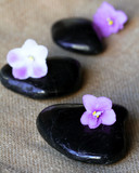 Spa black stones with lilac flowers