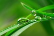 drops with green grass