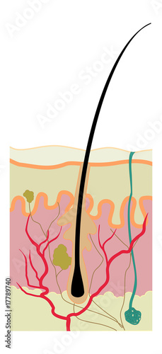Esquema de piel 2