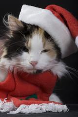 świąteczny kot 5