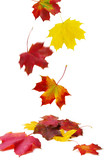 Fototapety fallende Blätter