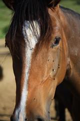 La cara del caballo