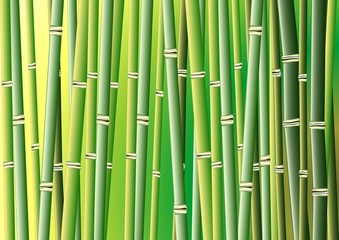 Bambus Vektor 1