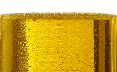 Glass of beer close-up with bubbles