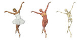Anatomical Overlays - Ballet poster