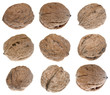 Nine walnuts isolated on white background