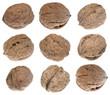 Nine walnuts isolated on white background