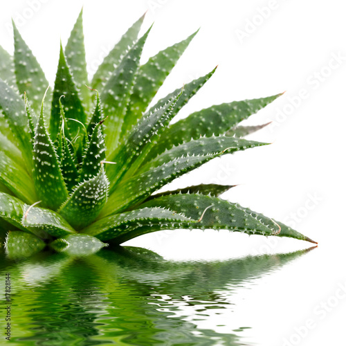 Fotobehang Cactus Aloe