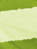 Template with Ragged Leaf Texture Background poster