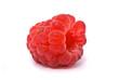 Forest raspberry. Macro shot. Studio white background