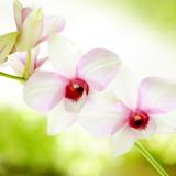 Fototapeta perfumy - romantyczny - Kwiat