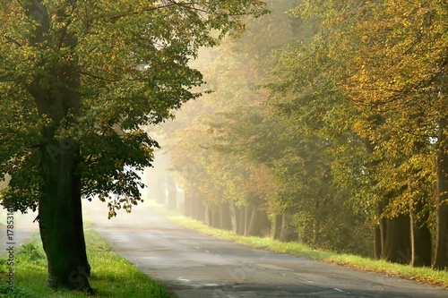 Autumn scenery of the forest road in the fog at sunrise