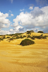 The sandy dunes and  bushes