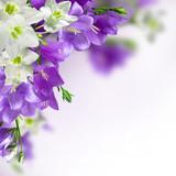 Fototapeta lilia - tło - Kwiat