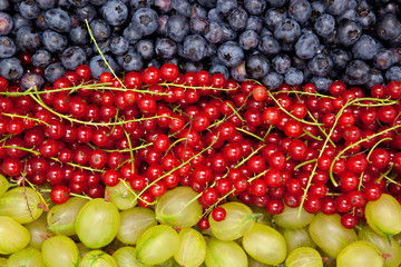 blue berries, red currants and green gooseberries