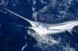 Leinwandbild Motiv Beautiful white marlin real billfish sport fishing