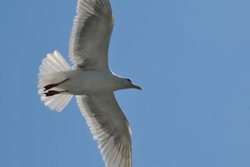Gliding Artist II