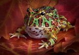 Fototapete Fallen - Nocturnal - Reptilien / Amphibien